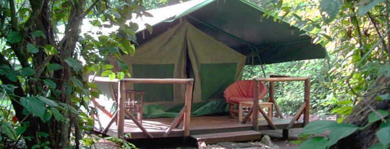 Bwindi Gorilla, Chimpanzee Trekking Safari | Uganda Adventure