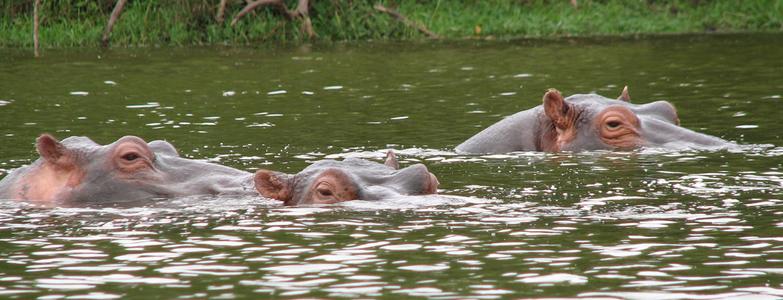 Wildlife Tour to Lake Mburo and Bwindi Impenetrable Forest Safari