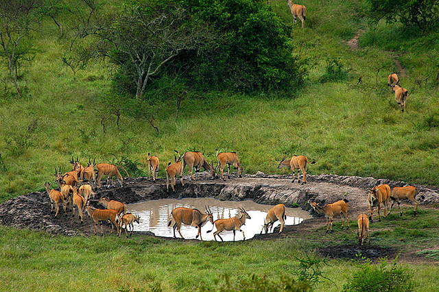 3 Days Wildlife safaris, Lake Mburo National Park in Uganda