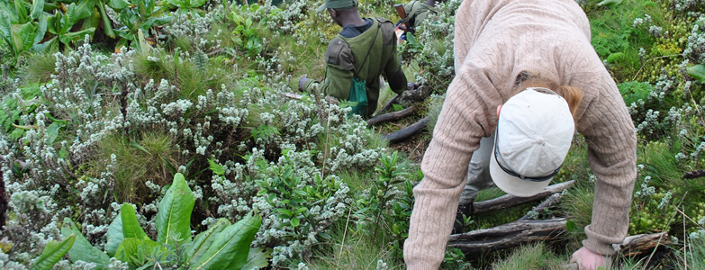 4 DAYS Gorilla Trekking Tour and Mgahinga Hiking